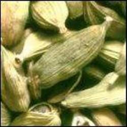 HUILE ESSENTIELLE de Cardamone (Anomum cardamom)