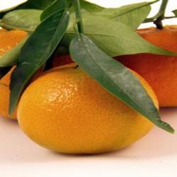HUILE ESSENTIELLE de Clémentine (Citrus nobilis)