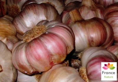 GÉLULES d'Ail 280 mg, (Allium sativum)