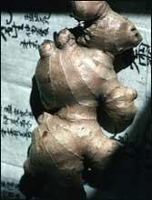 Poudre de Plante médicinale de Gingembre, Zingiber officinale