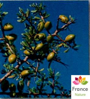 HUILE VÉGÉTALE d'Argan, (Argania spinosa)