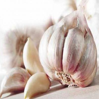 HUILE ESSENTIELLE d'ail rose de Toulouse