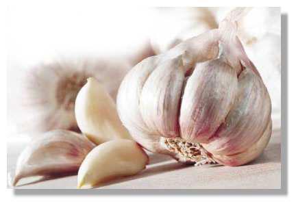 HUILE ESSENTIELLE d'ail rose de Toulouse ( Exclusivité)
