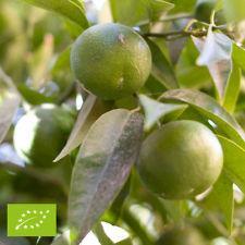 HUILE ESSENTIELLE de Mandarine verte (Citrus reticulata)