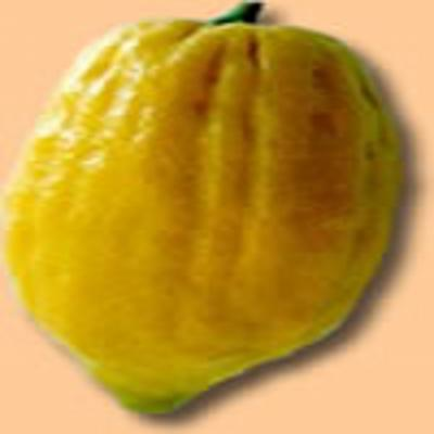 HUILE ESSENTIELLE de Cèdrat (Citrus medica L.)
