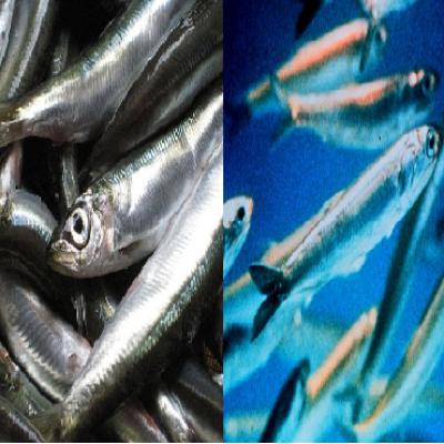 Capsules poissons des mers froides (gélules)