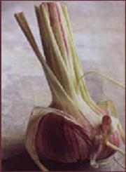 Poudre de Plante médicinale d'Ail (bulbe) BIO