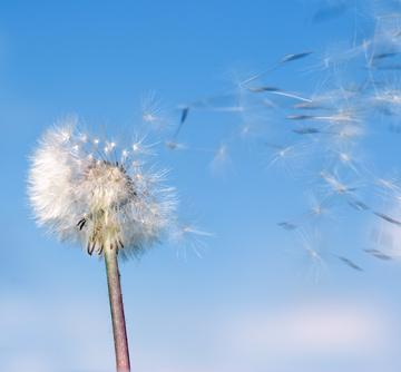 allergie-au-pollen_utiliser_un-purificateur-d.jpg