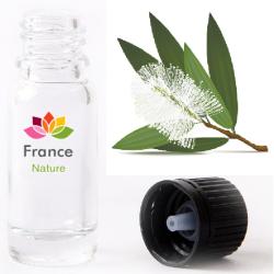 HUILE ESSENTIELLE de Cajeput (Melaleuca leucadendron)