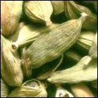 PLANTE MÉDICINALE de Cardamone (fruit), Anomum cardamom