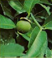 GELULES de Garcinia (230 mg), BIO