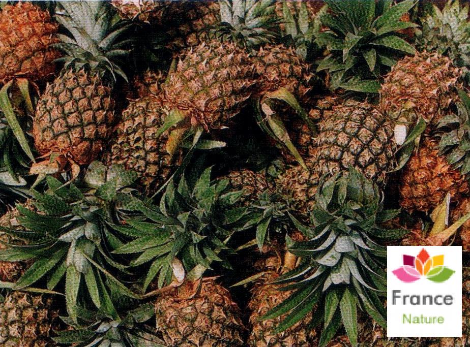 Gelules d ananas tige 250 mg ananas comosus
