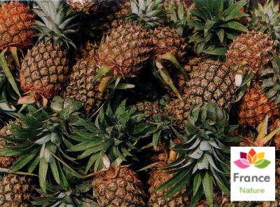 GÉLULES d'Ananas tige 250 mg, (Ananas comosus)