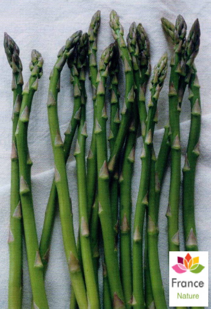 Gelules d asperge 220 mg asparagus officinalis