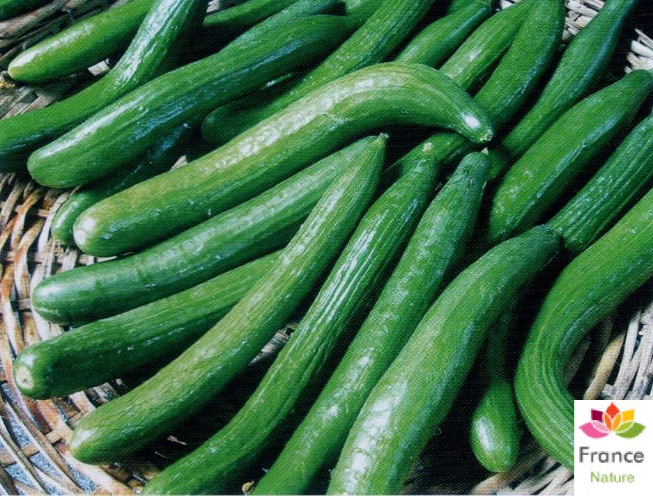 Huile vegetale de concombre france nature 1