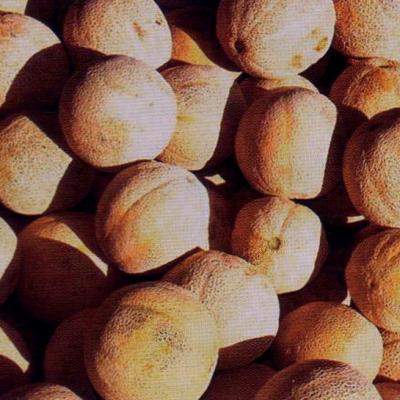 HUILE VÉGÉTALE de Melon (Benincasa hispida) BIO