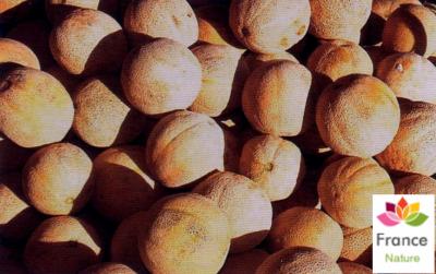 HUILE VÉGÉTALE de Melon (Benincasa hispida)