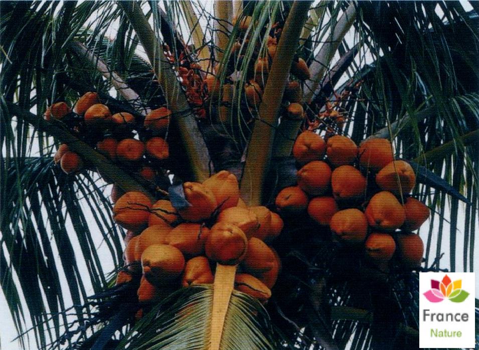 Huile vegetale de noix de coco france nature