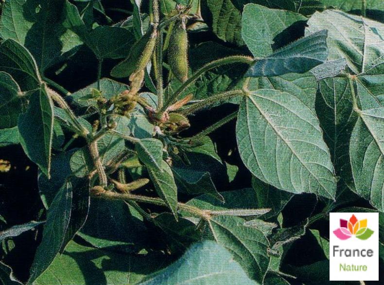 Huile vegetale de soja france nature